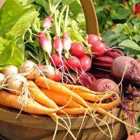 Заговор для урожая на огороде