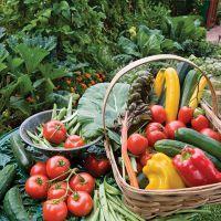 Заговор сибирской целительницы для урожая на огороде