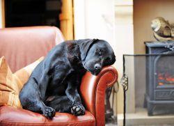 Заворот кишок у собак - симптомы