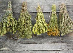 желчегонные средства при застое желчи травы