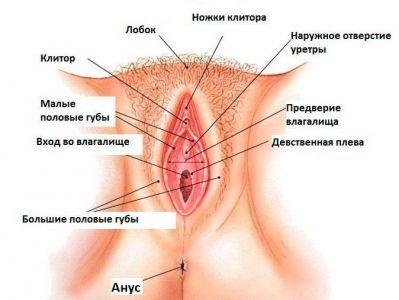 ženski reproduktivni sustav 2