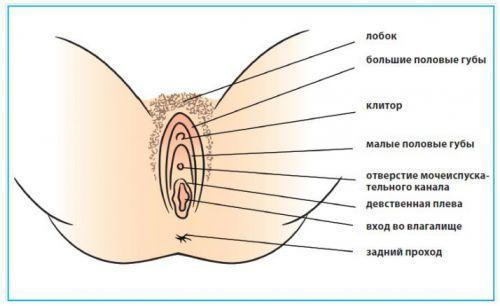 ženski seksualni guby1