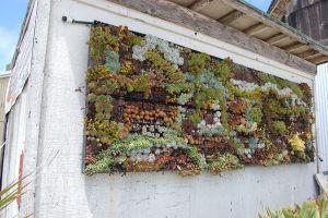 «Живые» стены в вертикальном озеленении