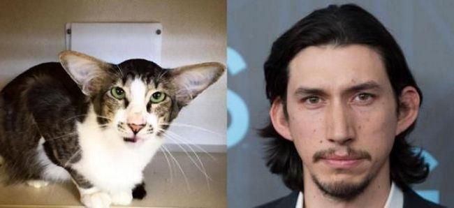 Адам Драйвер и кот Кори